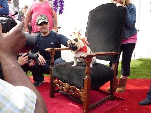 Ralph and pug