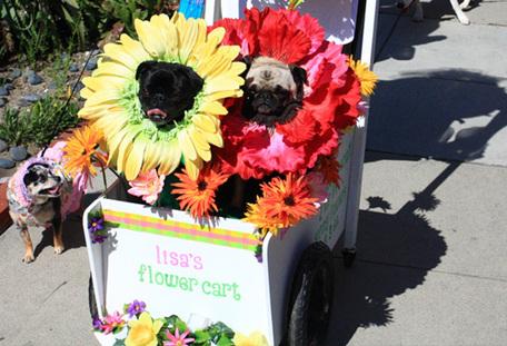 Pug_parade